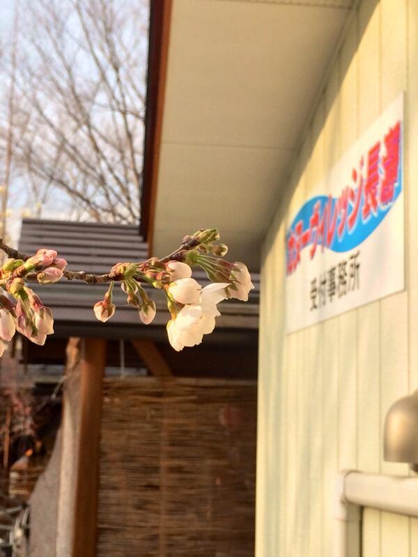 4月2日ヴィッレッジ1本桜