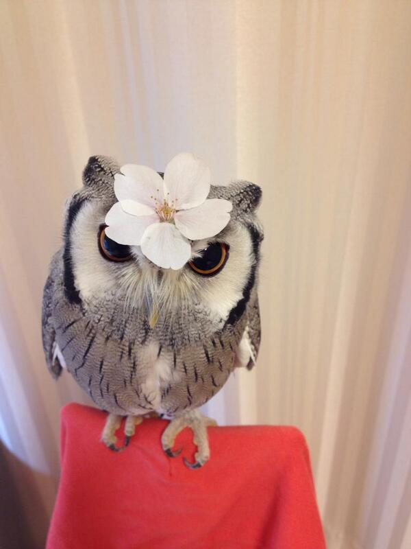 さ「また頭に桜の花びらを乗せられる季節か…」 pic.twitter.com/fPriaJtgZs