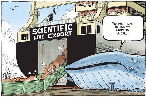 live animal export in australia This article analyses a recent media campaign by animals australia and the  royal society for the prevention of cruelty to animals in.