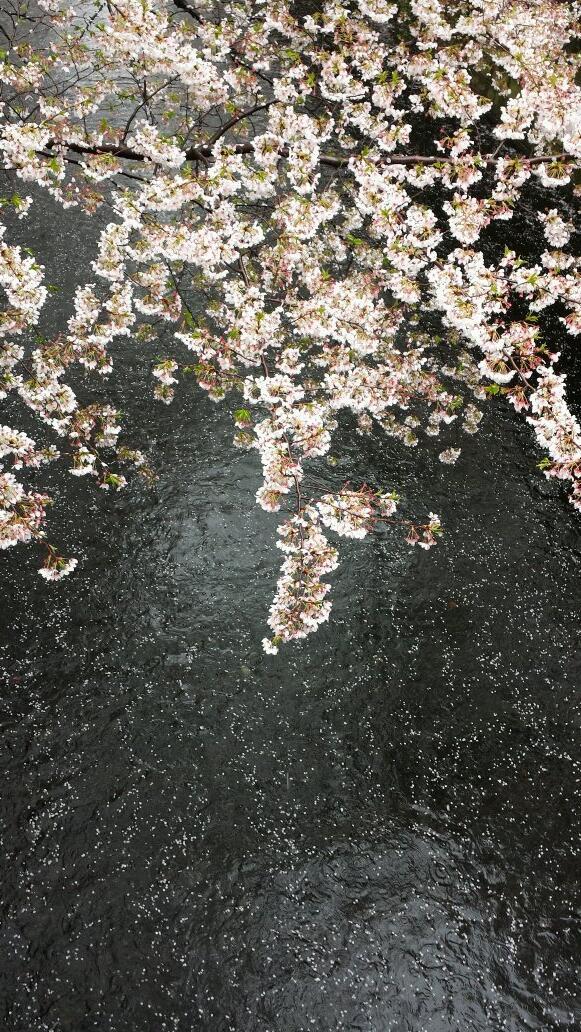 目黒川の桜は散り、漆黒の川面に蒔絵のように見事。 http://t.co/RbUQ2yvUCJ