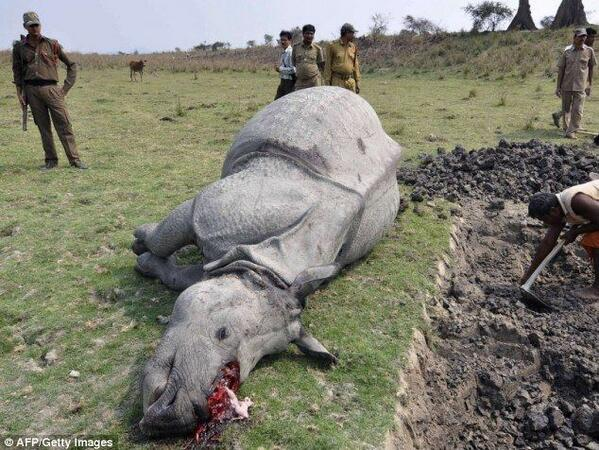 Two #poachers killed after killing #rhino & shooting at rangers!! http://t.co/1W883M2iEg http://t.co/QYcla6gYgz  #DeathToPoachers