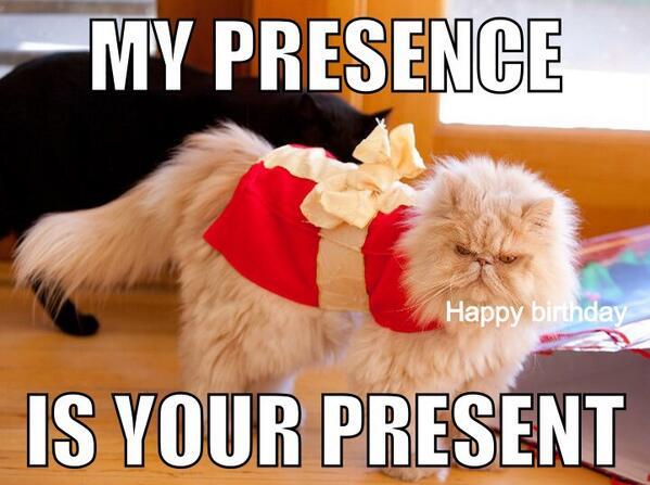@RealGrumpyCat @Friskies  Happy Birthday from Oaty and I! http://t.co/39BhXDFKc1