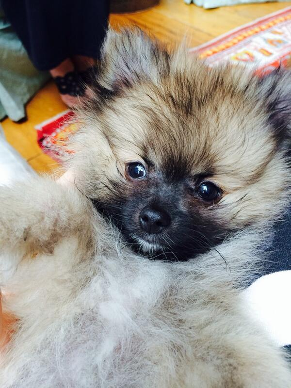 Miley Cyrus' New Puppy Is A-Freaking-Dorable