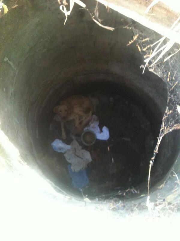 """""""@ccdulcinea: """"@paloespin:  RT Perro atrapado hace días en Av.Acevedo @Quilpue , Quien puede ayudar en su rescate? http://t.co/QnX2HbDd8z"""""""""""