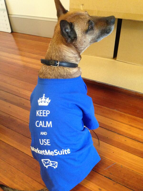 It's hard for a dog to #GetTwitterFollowers. Lucky for him, he has MarketMeSuite! Try it FREE! http://t.co/oDZgyA4y1B http://t.co/IVF8DHHDLn