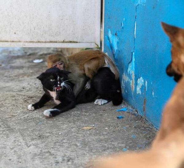 ここはオレが守る!おまえはそこでじっとしてろ。な猫 pic.twitter.com/HczbHdTLrB