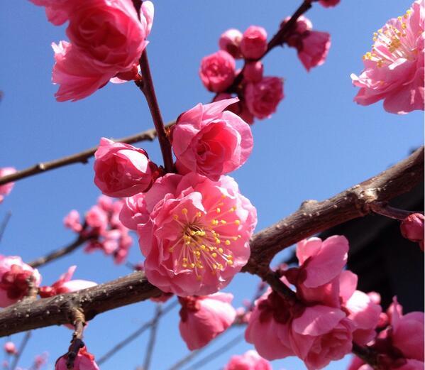 春がいっぱい http://t.co/XgIdfSIezL