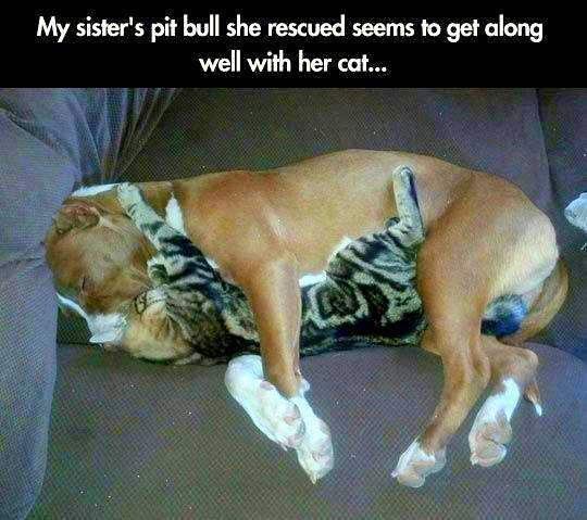 Together, we WILL #ENDBSL - Breed Specific Legislation AND Breed Discrimination - once and for ALL! #AnimalsHaveSouls http://t.co/iDjSjWIPo5