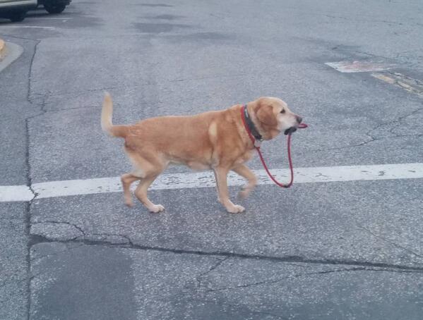自己管理能力の高い犬