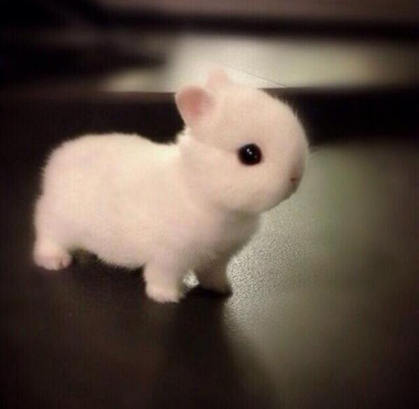 まっしろなウサギ pic.twitter.com/h5jm0Lm4bN