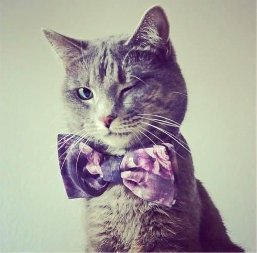 Bildergebnis für good evening cats images