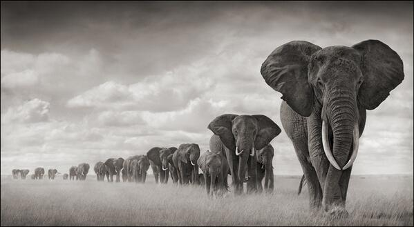 #stoptheslaughterofelephants  Please RT' http://t.co/tQabq1vZsc