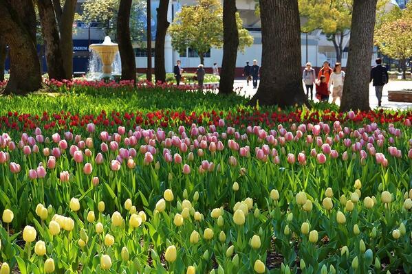 横浜公園に咲く、69種類16万本のチューリップは今が見ごろ!今週末はチューリップまつりが開催⇒ http://t.co/PIPVha3l81 #横浜 #横浜スタジアム http://t.co/AxLg7N0s8c