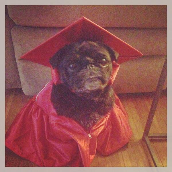Look at @asathepug she's got a cap and gown for an upcoming photo shoot!  Are you jealous @ButlerBlue3 ?