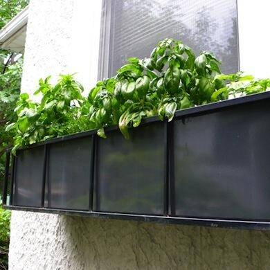 Did you know basil is a natural fly repellant? Plant it near windows or doors to deter pests! http://t.co/136BJwxRtI http://t.co/F29o2MURX0