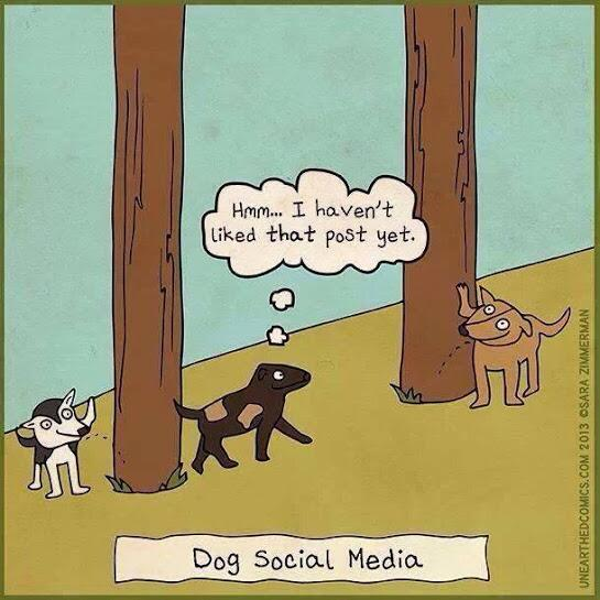 Twitter / JimConnolly: Dog social media! ...