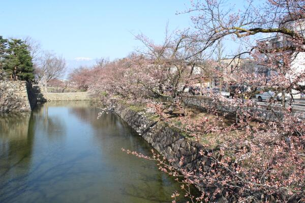 【国宝松本城の桜】開花を本日観測しました。 #matsumoto http://t.co/FkknbrroAo