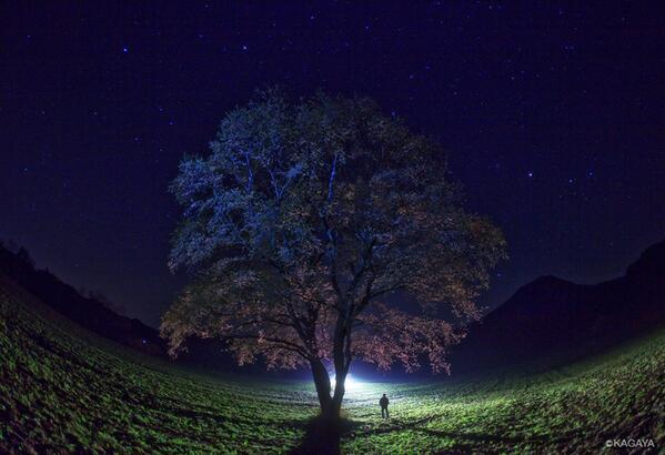 春の星座と夜桜。(過去の写真から) pic.twitter.com/bWQag0ExcS