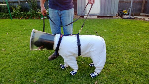 Random - Black Labrador is a beekeeper trained to sniff out deadly insect disease - http://t.co/c8D9nKMC8q http://t.co/qrlg0VkA1J