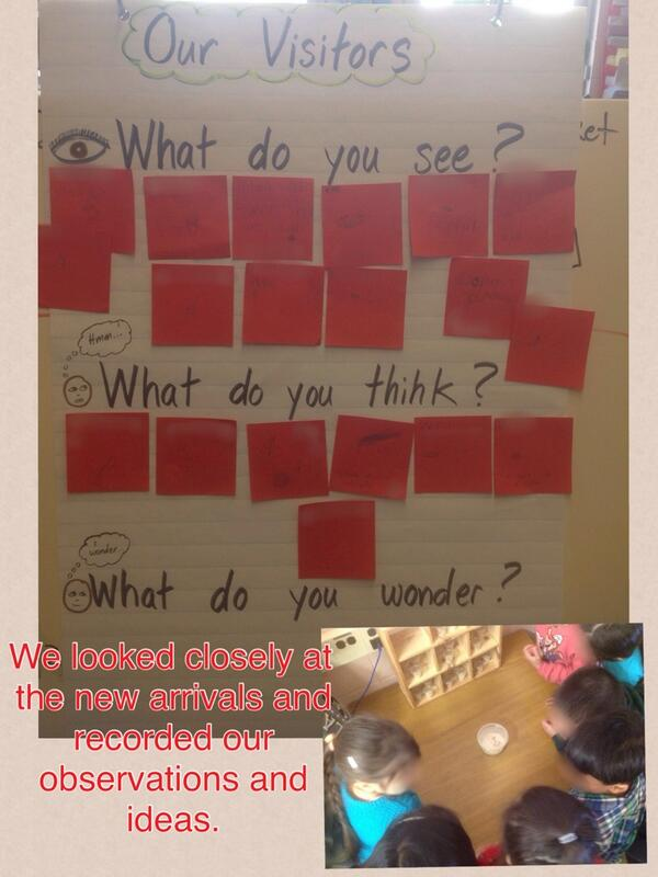 We looked closely at the new arrivals and recorded our observations and ideas. http://t.co/SwFRZmydHv http://t.co/phvyUL2Qnm #lookclosely