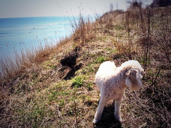The Young Citizen explores the muddy bluffs of Lake Erie. http://t.co/ottSyfI7nH