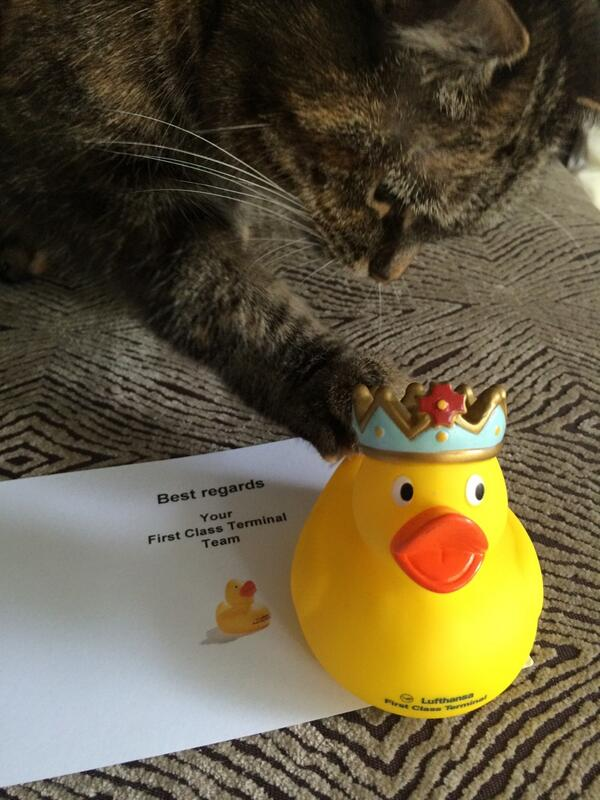 Even our cat loves my Lufthansa First Class Duck! Thank you @Lufthansa_FCT http://t.co/jdpJOdtKI2