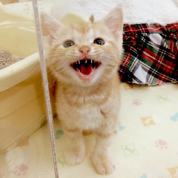 「見てんじゃねぇよ、くちょばばぁ〜!」と、くちょがきにイチャモンつけられた。 #猫部 http://t.co/UpPdia0TBd