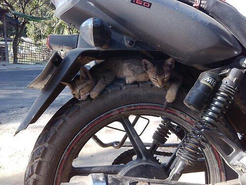 バイクに乗るときは、後輪のスキ間でネコが昼寝していることがあるので、気をつけましょう…。 pic.twitter.com/s7ydhVHHBY