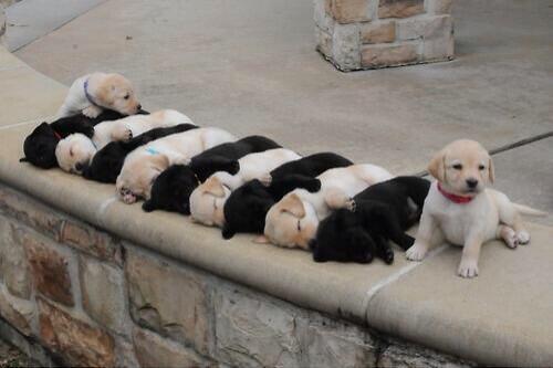 """こちらが、 """"ミルフィーユ状態"""" で昼寝をしている、子犬のみなさんです。 pic.twitter.com/OGK7SpqPmd"""