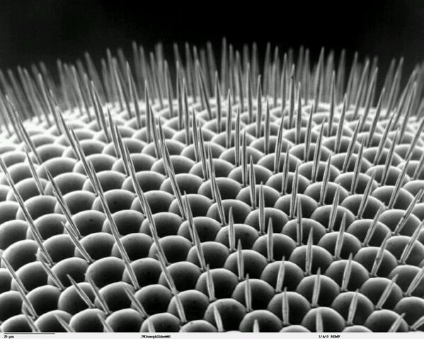 microscopic things on twitter a fly eye lens positioned at the