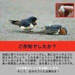 人間のごみのせいで小鳥がのたうち回って命を落としていく