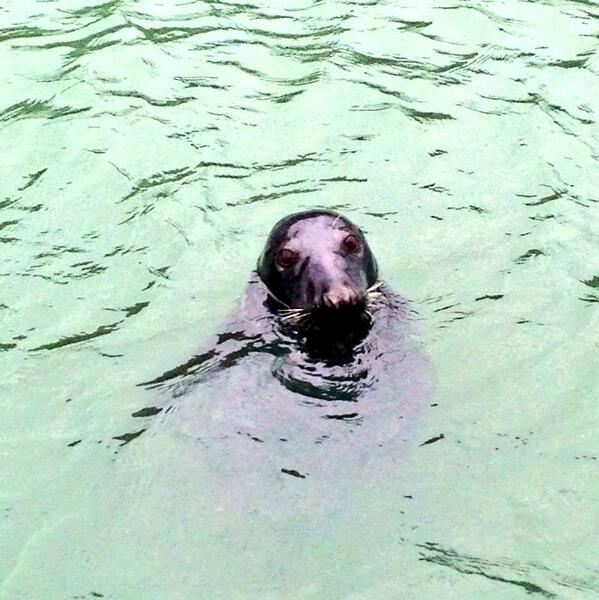 Sammy the Seal Wicklow Town