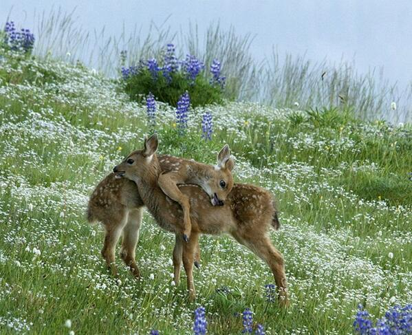 Flowers are beautiful, love is even more beautiful ☮ via @SWildlifepics @gede_prama @JFourcroy http://t.co/51EqqpVl4C