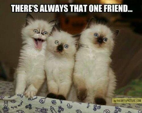 Cats on twitter quot we all have that one friend http t co sl6g6lopsp quot