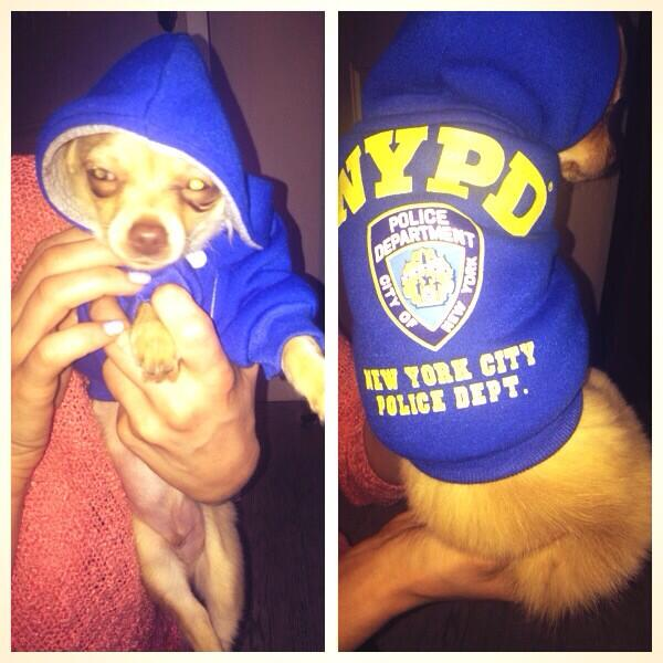 My Mum came back from New York and brought jasper this! 😂 He is #fuming http://t.co/yH9K7c0M0j