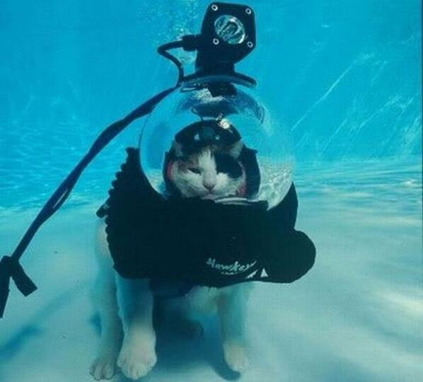 Can your cat scuba dive? No. Well then your cat is shit. http://t.co/AzHsyeFEY0