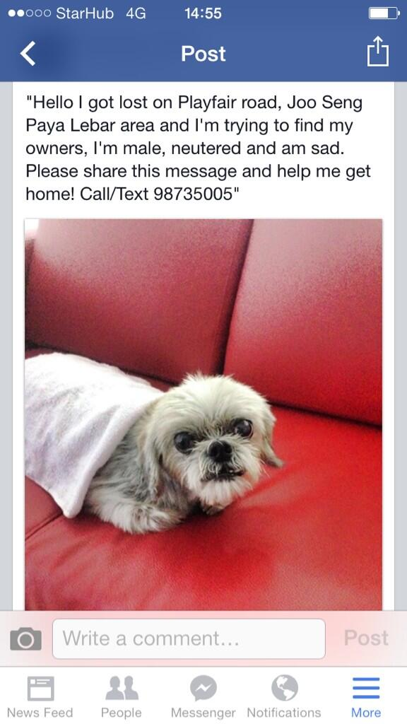 Lost dog! Pls share everybody thanks ! http://t.co/XrtVg0Votq