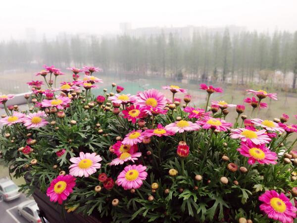 雨停了,花开了…… http://t.co/zIf3VcGjR4