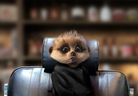 We take Baby Oleg for first fur cut. Is strange, he still have more fur than Sergei. http://t.co/aLOI0IhO5C http://t.co/sz9SIo9eT0