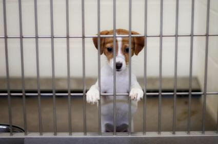 RT @pupaid: Good Friday for humans? Make it Better Friday for animals! Visit ur local rescue shelter & adopt a new pet :) #adopt http://t.c…