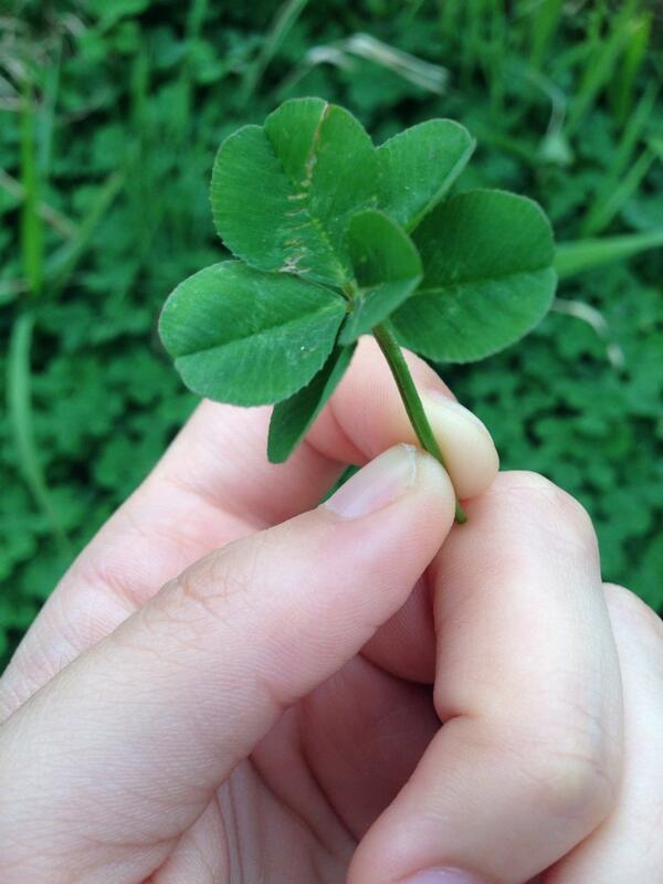 어제 찾은 6잎클로버. '기적, 희망'이라는 뜻이 있다는 모양이다. 로또보다 낫다. http://t.co/UTpdVM3iqH
