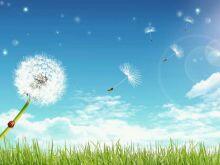 去年の種が今年に花を咲かせ 今年の種が来年の花となる 命のレールは永遠に続いていく https://t.co/txt6el1jAJ