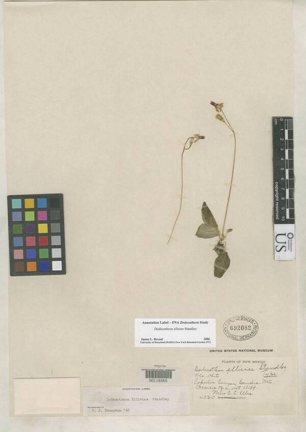 Uncovering new collectors in field notes: Charlotte Ellis's specimens http://t.co/8CQFW5Enff #botany @SiobhanLeachman http://t.co/ciOpqMNbQh