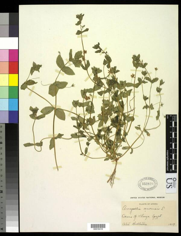 .@hmmoses Amazing! Hrdlicka collected specimens & theorized physical anthro. Here's a one from 1909 from @NMNH Botany http://t.co/ZXJFZV3p3m