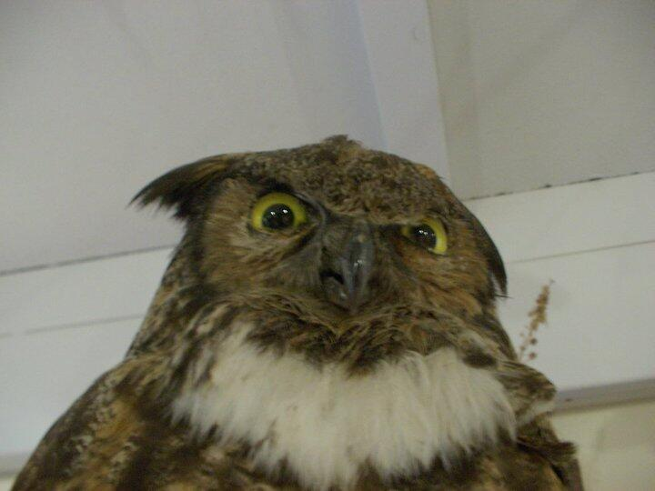 "RT @CrapTaxidermy: ""Heard you were talkin' shit bro."" http://t.co/i5BcLyjXeb"