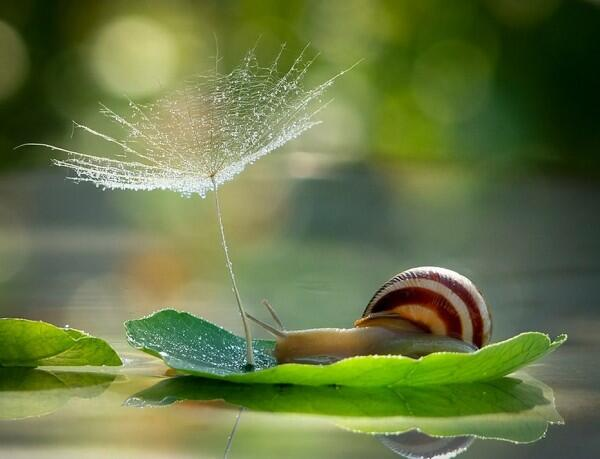 Take a look at these charming macro photos of snails: http://t.co/vfrtYj4uFv http://t.co/wCiO3i92Wp