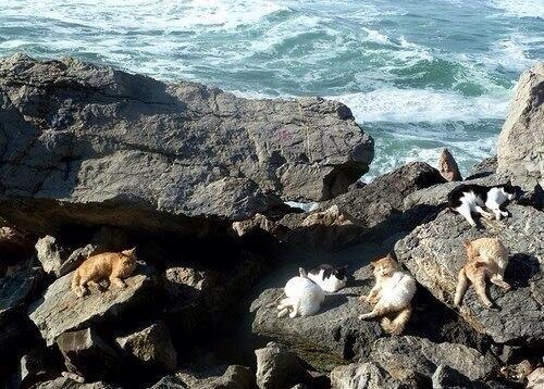 Морские котики ;) http://t.co/RYPtvxcCLL