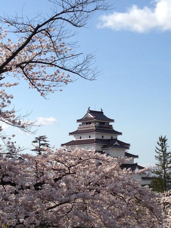 鶴ヶ城の桜は満開です。ぜひお花見においでください。 また、「春彩」春の鶴ヶ城フォトコンテストの作品募集中です。すてきな写真が撮れたらぜひ応募してくださいね。詳細はこちら→http://t.co/SwmMNQljE5 http://t.co/N0xon711ir
