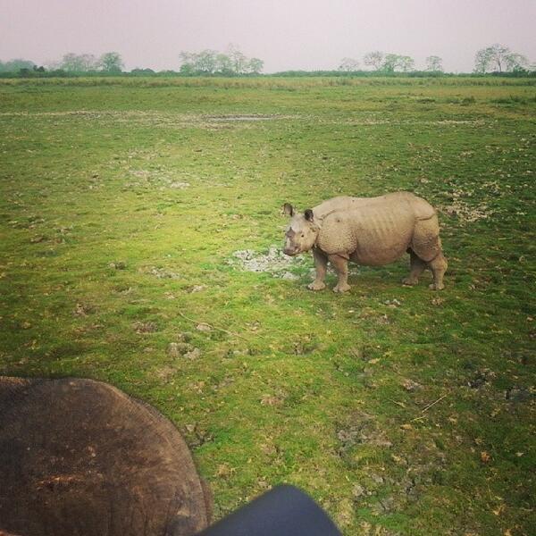#Kaziranga #OneHornedRhinoceros #Conservation #NationalParks #EndangeredSpecies #ElephantSafari #Nature #Travel #... http://t.co/EfKtGGEzfB