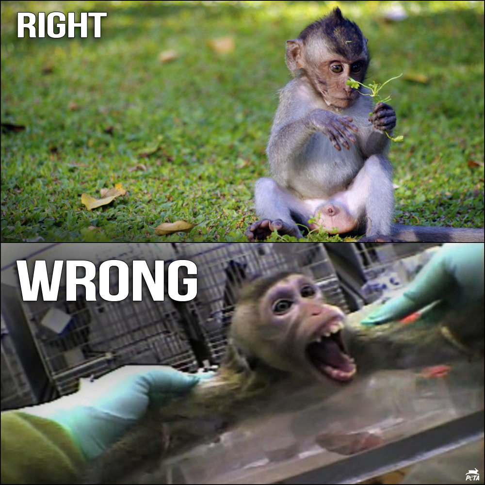 RT @peta: The LAST major airline still shipping monkeys to their DEATHS in labs: @AirFrance.  RT & SIGN: http://t.co/cd083EIty3 http://t.co…
